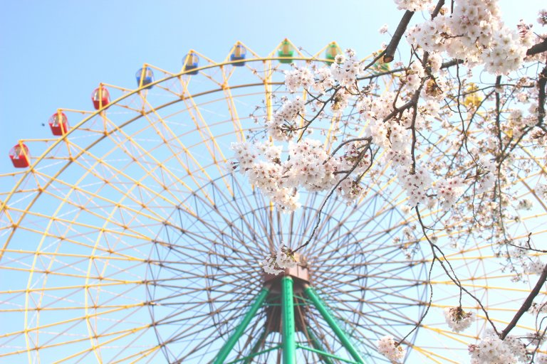 そろそろ満開!群馬県伊勢崎市の「華蔵寺公園花まつり」で桜を楽しもう!