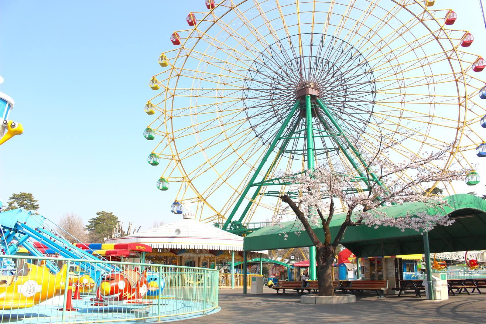 華蔵寺公園には遊園地もあるので桜を見ながら子供と一緒に遊べます