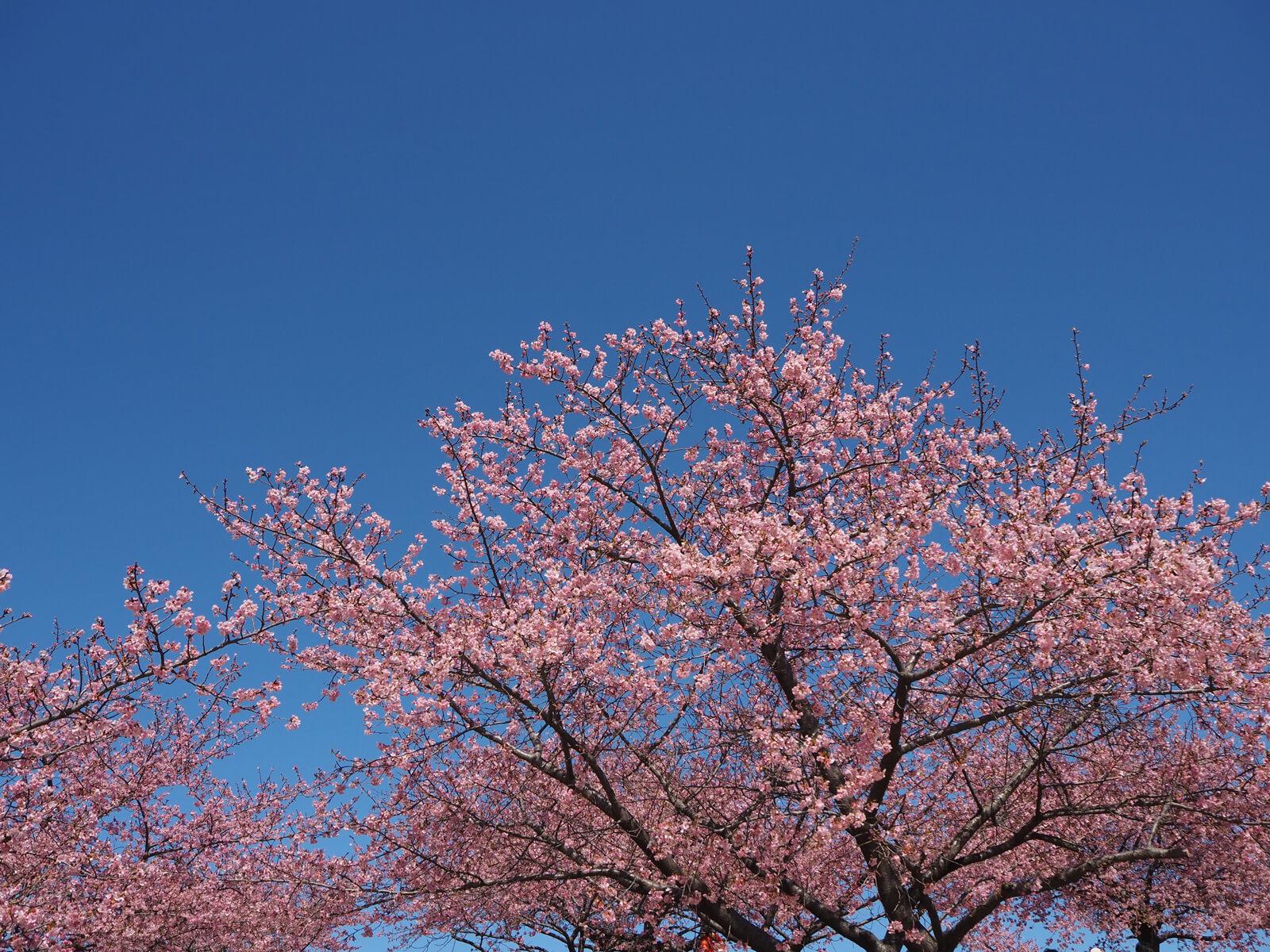 近くまで寄るときれいに咲いているのがわかります